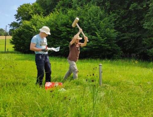 INTERNSHIP at the Slovenian Forestry Institute