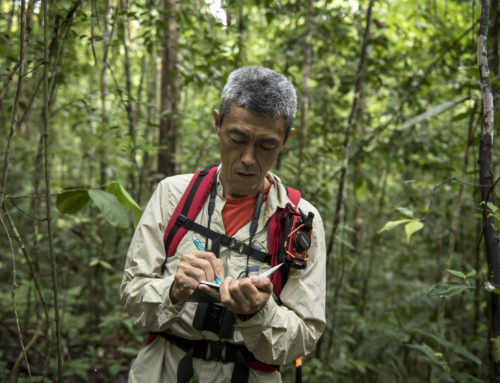 Boosting transparency of forest data
