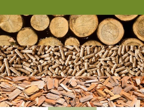 Dare to Explore! Experience: The potential of woody biomass and new ideas for a professional career