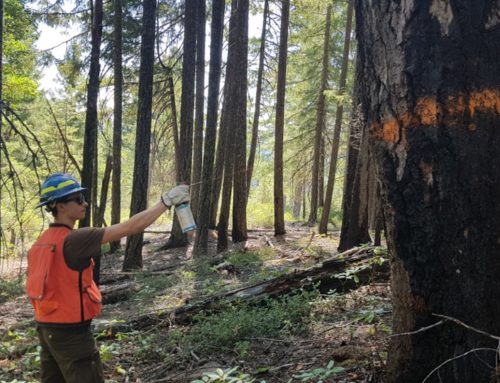 INTERNSHIP at the Klamath National Forest (US Forest Service)